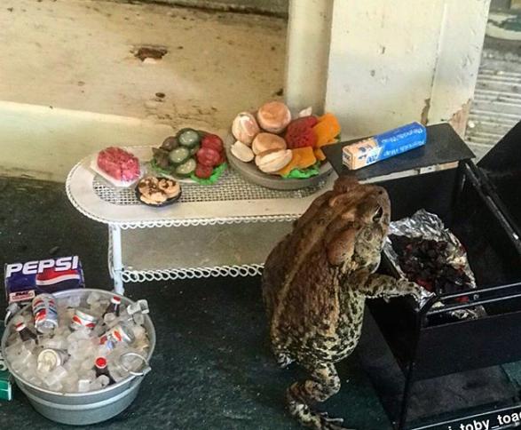 Дикую жабу превратили в звезду Инстаграма