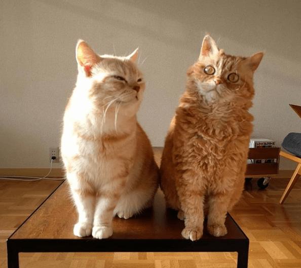 овечьи кошки в инстаграм
